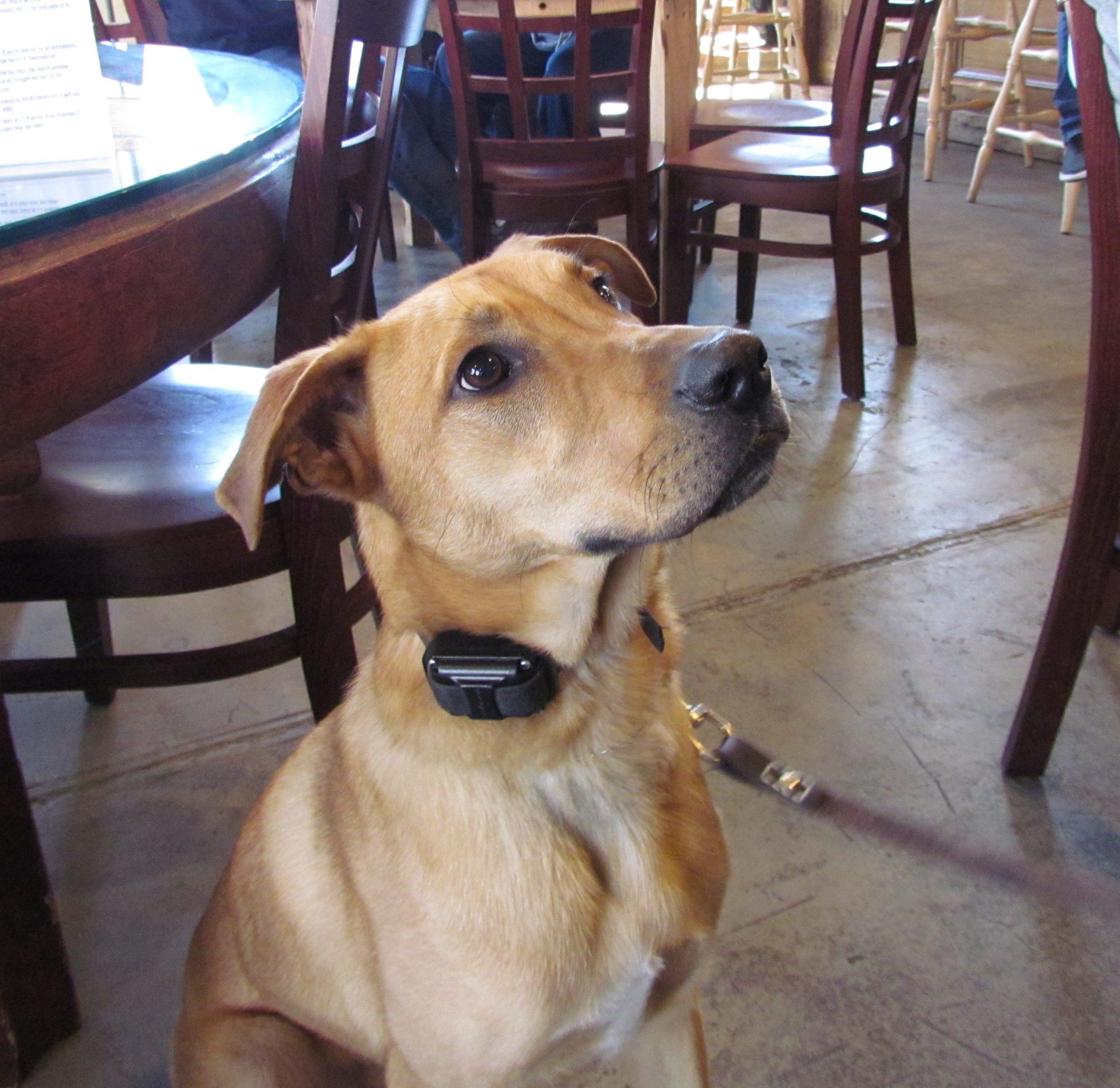 IMG_3897 Baxter (Maureen Webb's son's dog)